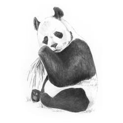 Crochiu incepatori-Panda 13x18 cm