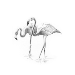 Crochiu incepatori-Flamingo 13x18 cm