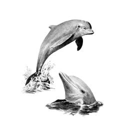 Crochiu incepatori-Delfini 22x29 cm