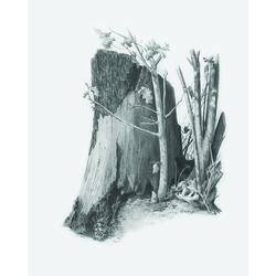 Set pentru realizarea unui desen in creion - Trunchi de copac
