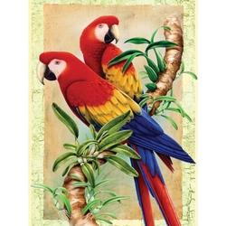 Prima mea pictura pe numere - Papagali