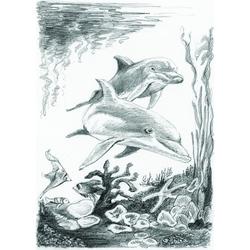 Set pentru realizarea unui desen in creion - Delfini