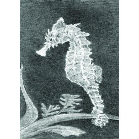 Set pentru realizarea unui desen in creion - Calut de mare