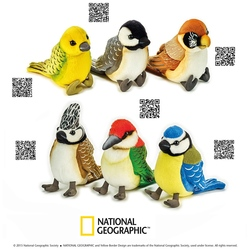 Pasari colorate jucarii din plus National Geographic