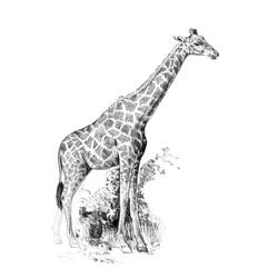 Crochiu incepatori-Girafa 13x18 cm