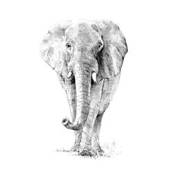 Crochiu incepatori-Elefant 22x29 cm