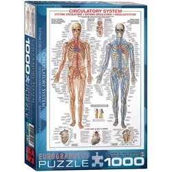 Puzzle 1000 piese Circulatory System