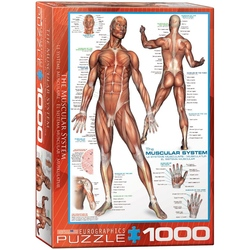Puzzle 1000 piese The Muscular System