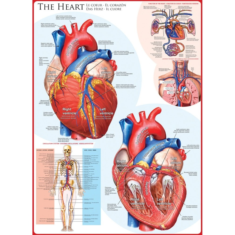 Puzzle 1000 piese The Heart