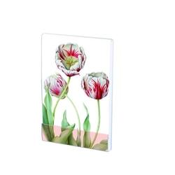 Carnet notite A7, 32 pg, Tulipa 'Teyler', Anita
