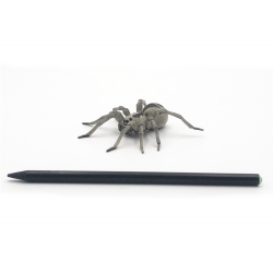Figurina Papo-Tarantula dimensiune