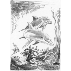Schita creion incepatori-Delfini importator