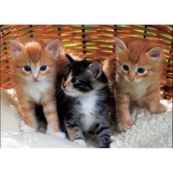 Puzzle pentru copii-Pisicute in cos 99 piese