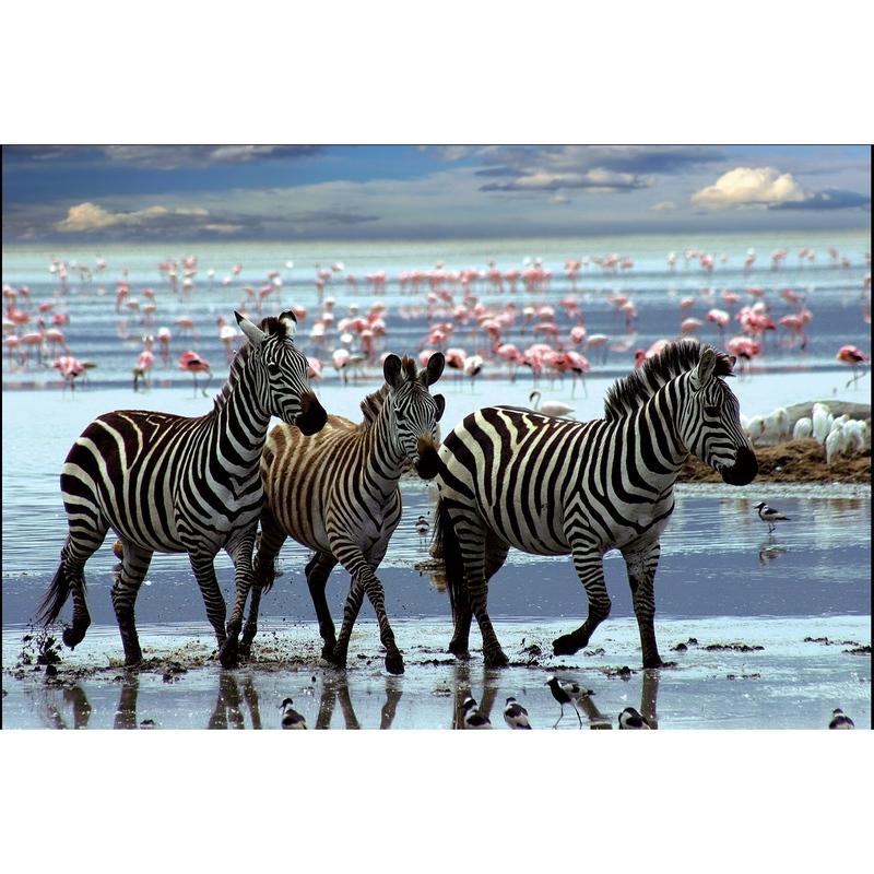 Puzzle 1000 piese Safari Zebre