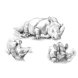 Set pentru realizarea unui desen in creion - Rinoceri